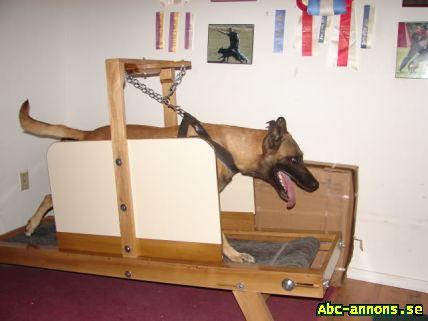 Carpetmill köpes Hundar & tillbehör Abc annons.se Gratis