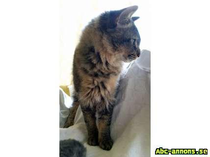 La Perm Lockig Katt Hane Omplacering Katter Amp Tillbeh 246 R