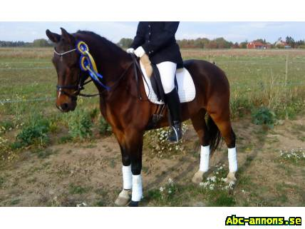 D ponny till salu