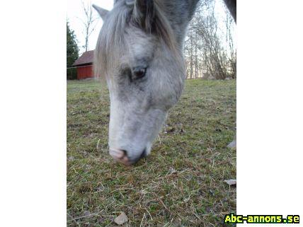 foderstatsprogram häst gratis