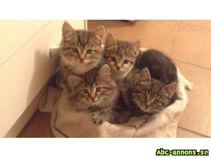 kattungar bortskänkes östergötland