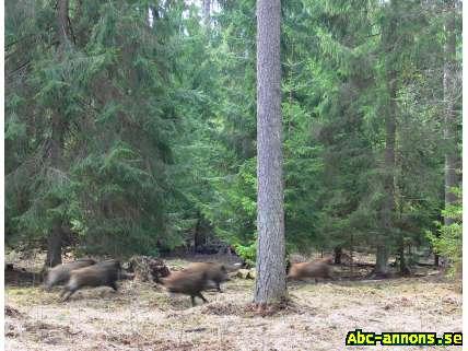 Pris skogsmark